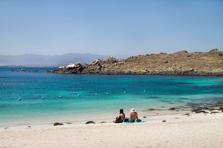 La Serena and Surroundings: Punta de Choros, Chile