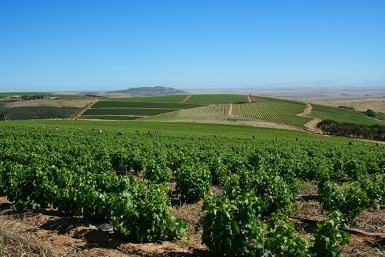 Fairview and Spice Route: Discovering the Wines of South Africa