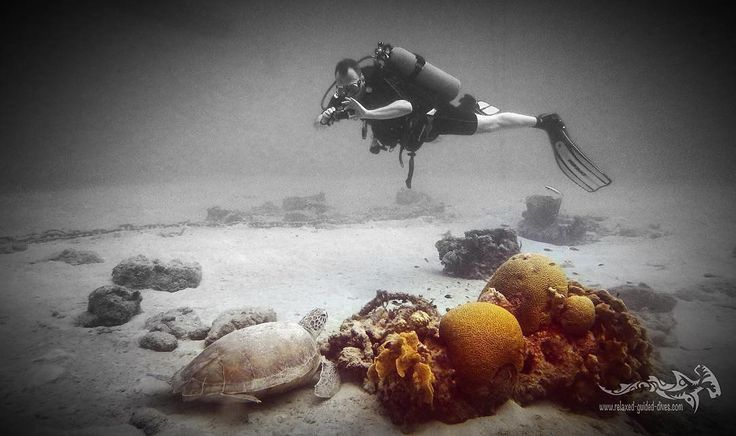 Having a good bouancy for taking a steady picture is important...  #scuba #scubadiving #relaxedguideddives #padi #travel #explore #discover #curacao #fun  #duiken #tauchen #diving #tripadvisor #cressi #oceanreef