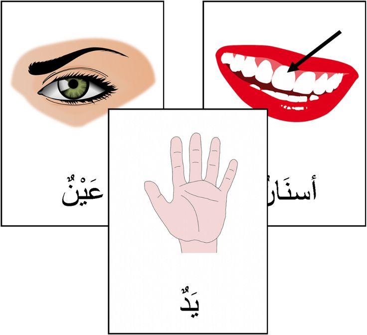 """Cartes de nomenclature """"le corps humain"""" en arabe / imagier"""