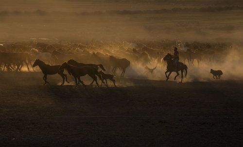 Beautiful The Coutry of Horses by Ramiz Şahin