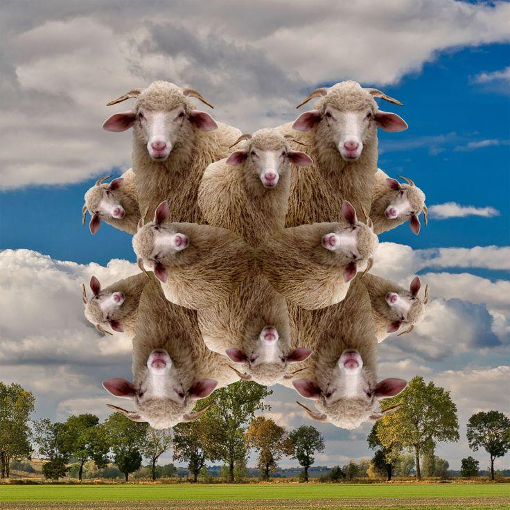 chusta: owce, owce  materiał: modal z domieszką kaszmiru  autor: Filip von Polen.