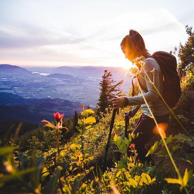 Alpine flowers and sunshine at Elk Mountain in Chilliwack - a great hiking spot!   @adventuresofdandb via Instagram) #explorebc #explorecanada