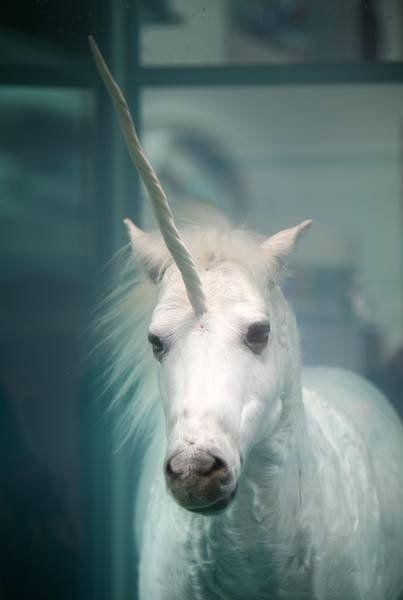 Unicorn, they do exist. #fantasy