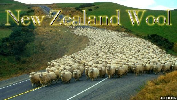 NEW ZEALAND #WOOL is a #sustainable material which is completely #renewable, #biodegradable and responsibly grown by farmers who care. Wool has unique physical properties which give it superior performance capabilities and make it ideal for use in the #bedding industry. The wool we use in our #mattress covers is Joma wool. Visit us today at 361 King St. Unit 2!