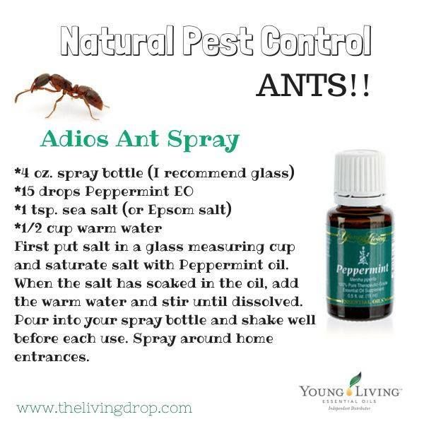 Best 25 ant spray ideas on pinterest ants repellant ant killer get rid of pesky ants with young living peppermint oil non toxic and natural ccuart Choice Image