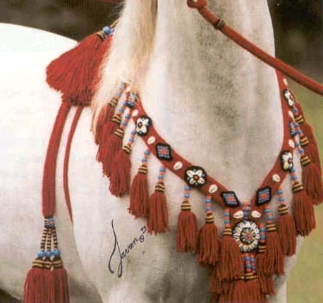 Authentic Arabian Halters| Arabian Horses of Diamond M Arabians