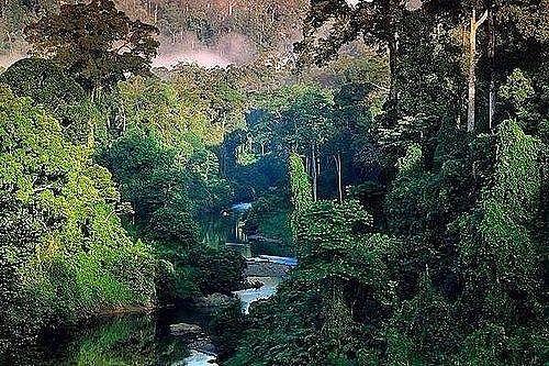 Амазонские тропические леса, Южная Америка