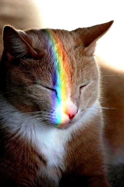 Rainbow Color Light Prism On Sleeping Cat 175 184 De L Arc