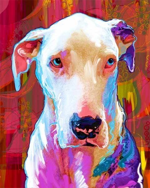 Colorful Pet Portraits
