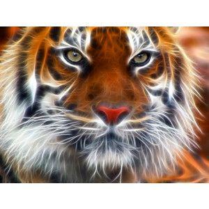 Best 25 Aquarium Screensaver Ideas On Pinterest