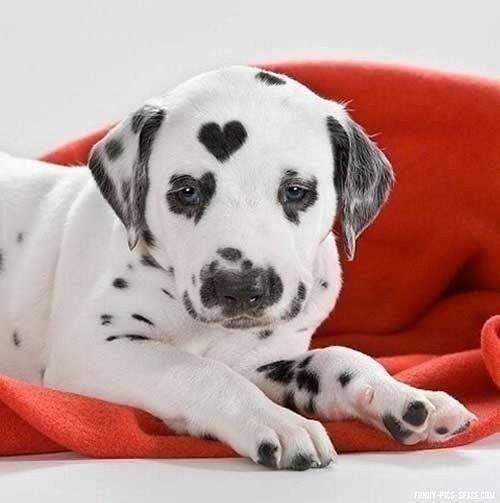 Aw so love this heart on the head how cute