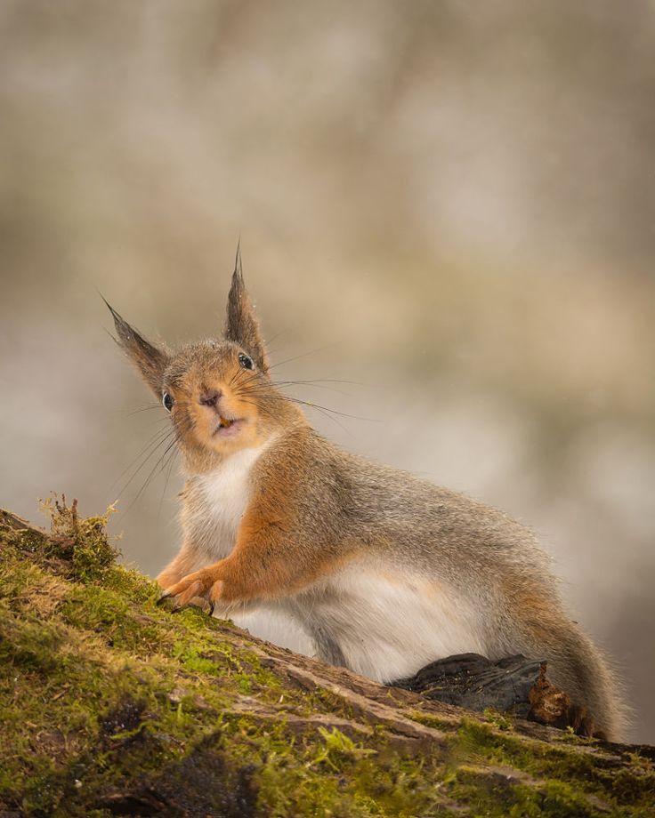 ='ᴥ'= Squirrel Sez: WTH you lookin' at ??! -   (down look by Geert Weggen on 500px)