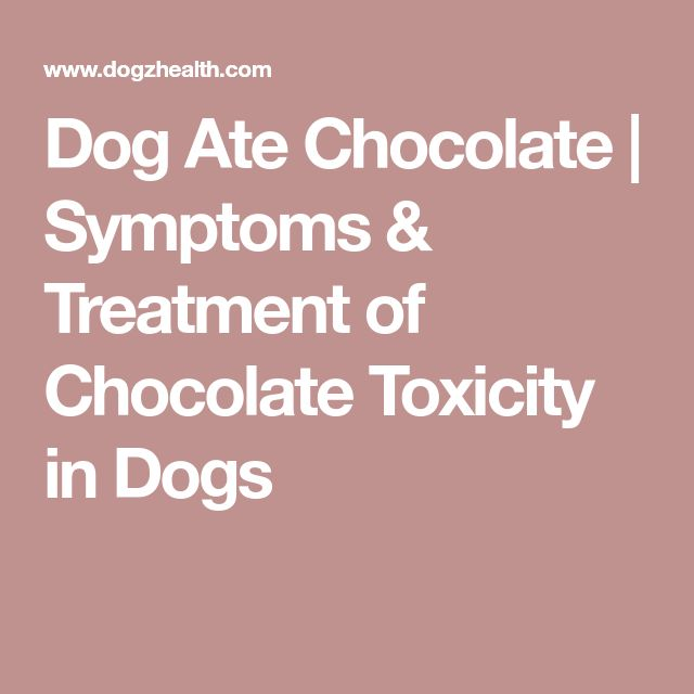 Dog Ate Chocolate | Symptoms & Treatment of Chocolate Toxicity in Dogs