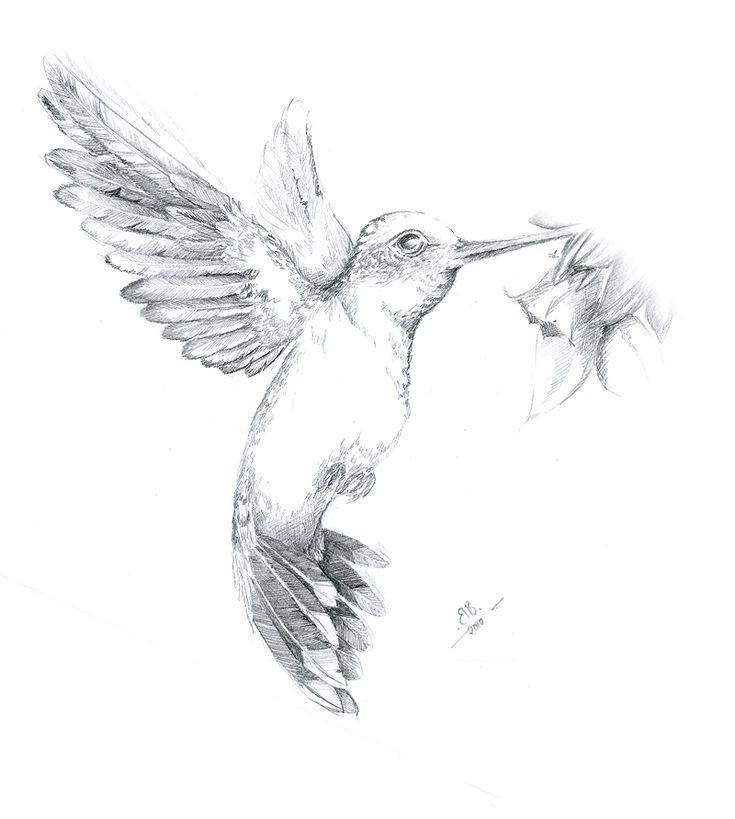 Kolibri, Vogel, Zeichnungen, Tiere, Wandmalerei