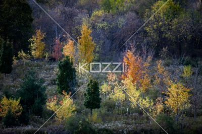 view of autumn trees. - Image of autumn trees.