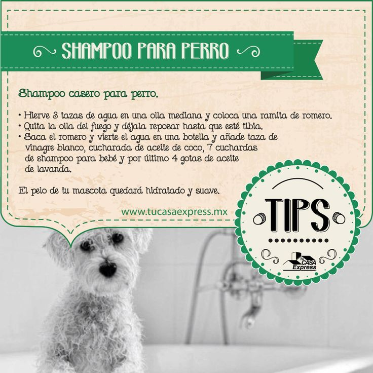 Estas vacaciones pueden ser el momento ideal para bañar a tu perro y para ello te dejamos nuestros #TipsExpress para hacer shampoo casero para tu #mascota. Tu Casa Express.