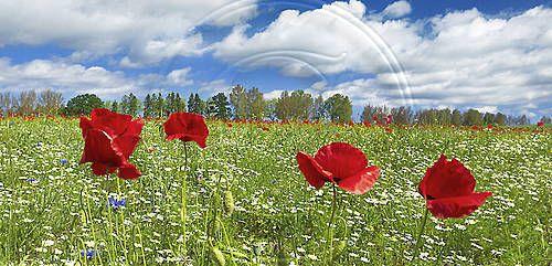 Stawa Młyny | bank zdjęć - zdjęcia, fotografie - Lato - lato, krajobraz ...