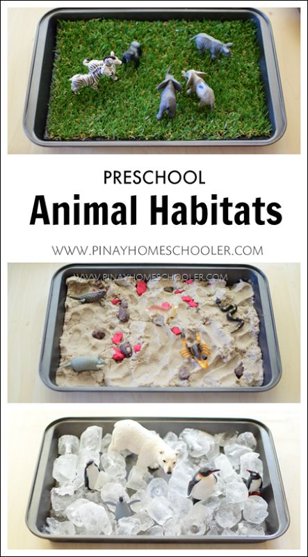 Preschool Animal Habitats using Sensorial Materials | The Pinay Homeschooler