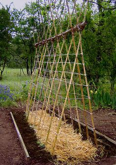 Cucumbers and peas trellis    http://deirdrepope.com/my-garden-projects/garden_project_teepeetrellis/