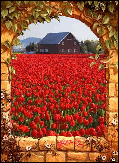 Hermosas rosas rojas.