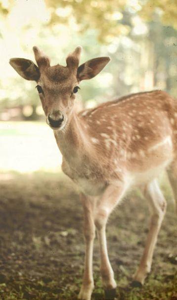 Little Buck.