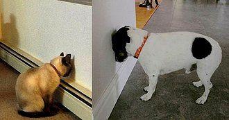 Si Tu Mascota Apoya su Cabeza Contra una Superficie Sólida ¡Puede Estar Enfermo!
