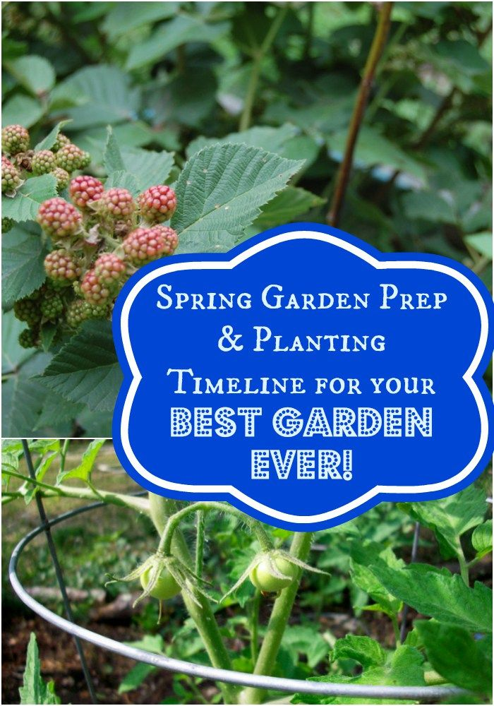 Are you ready for your best garden ever?? Check out our spring garden prep & planting timeline to get you on your way!