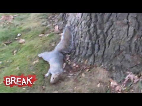 Drunk Squirrel Tries to Climb Tree - Break Fails - YouTube