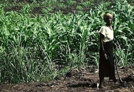 Growth Green Agriculture Plc is a UK based agricultural investments company specialising in emerging markets offering lucrative opportunities to invest in Ghana. GGAgriculture acts as consultant on green and socially responsible investments to the private and institutional investor community in Europe. ggagriculture.com