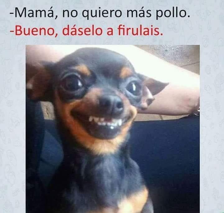 Firulais En La Barra Humor Gracioso Memes Sarcasticos Chistes Graciosos