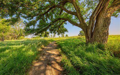Scarica sfondi strada di campagna, giornata di sole, albero