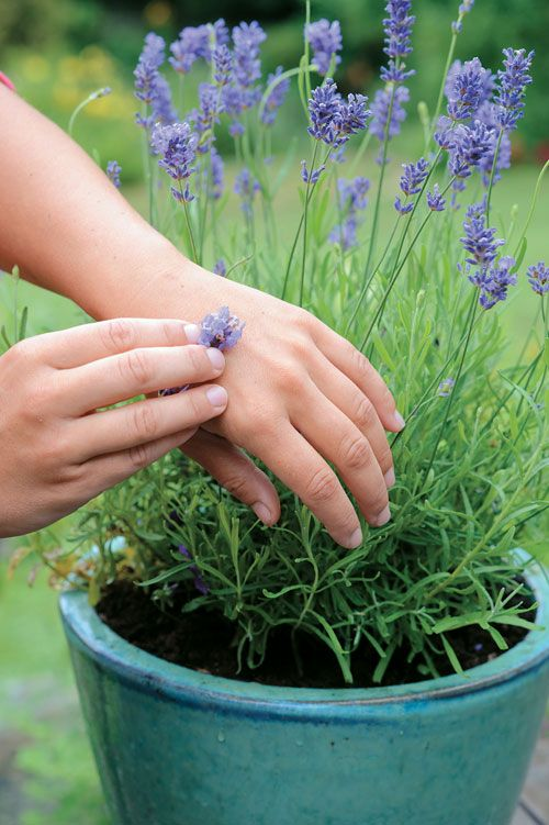 """""""Herbal Remedies for Bug Bites and Bee Stings[...] simple and effective"""" i.e. """"Rubbing herbs directly on bites and stings can bring instant relief. Lavender and basil help prevent swelling and relieve pain. Crushed plantain leaves draw out toxins and lavender flowers are healing and anti-inflammatory; both are excellent for wasp stings and mosquito bites."""""""