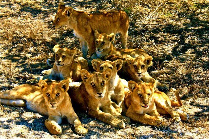 Amazing! - Tanzania
