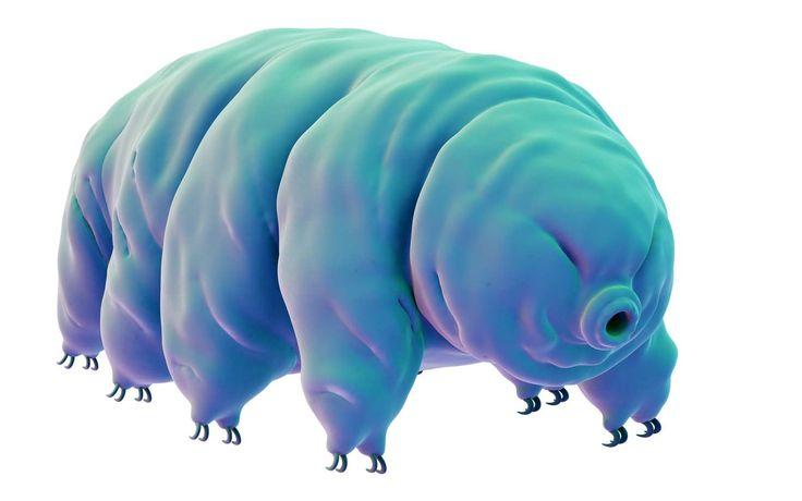 Stupéfiant : Thomas Pesquet découvre des tardigrades vivants sur l'ISS