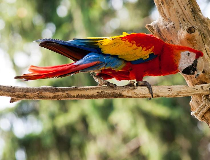 I pappagalli...