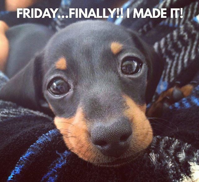 Yeah!!...and we have a nice gift for you link in the bio  .  @martha_dachshund