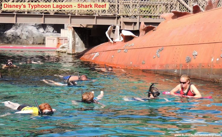 Disney's Typhoon Lagoon Water Park - Shark Reef is a 362,000 gallon saltwater artificial reef that gives you a chance to gently try snorkeling with leopard sharks & bonnethead sharks in a wonderful and safe way. All equipment (including life jackets) is provided & lifeguards are on hand. I love doing this: See: https://disneyworld.disney.go.com/attractions/typhoon-lagoon/shark-reef/