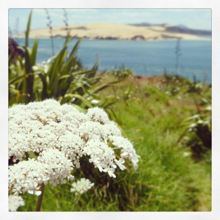 Beautiful Northland NZ, Oponini, 2013
