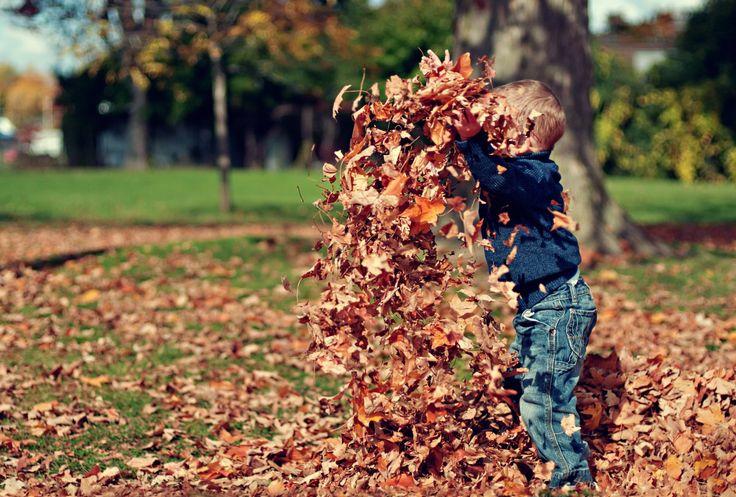 Die Herbstsonne zaubert eine fast magische Stimmung in die Wälder. Die Mischung aus Licht, Nebel und leuchtend buntem Laub ist für Groß und Klein gleichermaßen faszinierend. Jetzt macht es einfach …