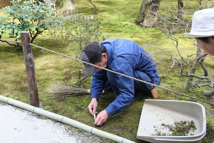 Voorbeelden Japanse Tuinen. Wij realiseren die ook voor u.