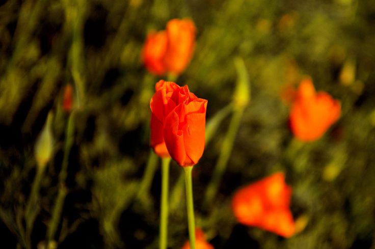 #nature #flowers #fotografia #photoshop