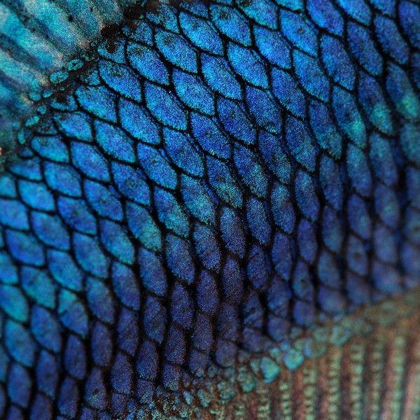 Ms de 25 ideas increbles sobre Escamas de pez en Pinterest