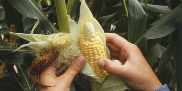 How To Shuck Corn Without Making A Scary, Hairy Messy Disaster + RECIPES