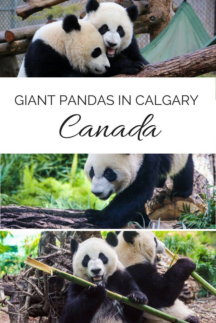 How To Snag Calgary Coupons For The City S Top Attractions Canada Travel Road Trip With Kids Visit Canada
