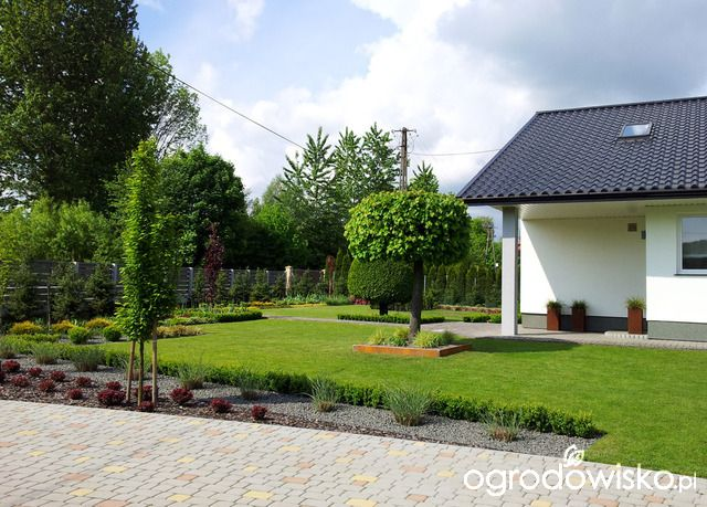 Moja codzienność - ogród Oli - strona 1436 - Forum ogrodnicze - Ogrodowisko
