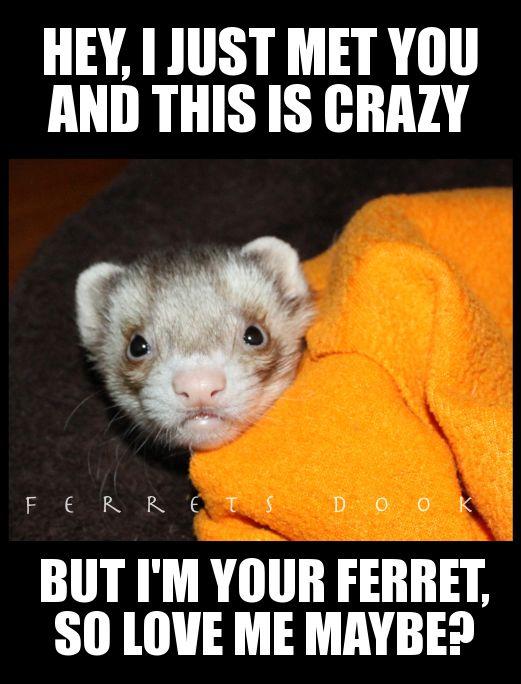 how to make ferret treats