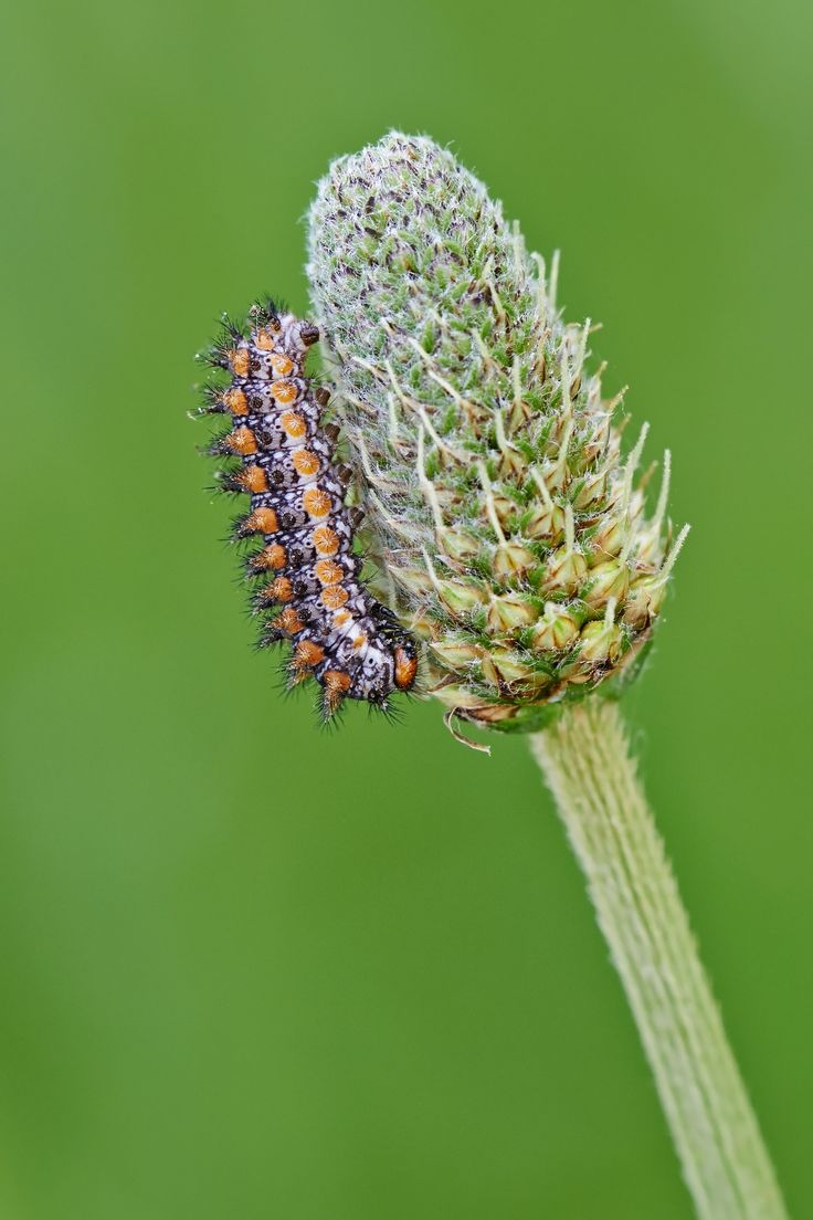 orange caterpillar by Stefano Disperati on 500px
