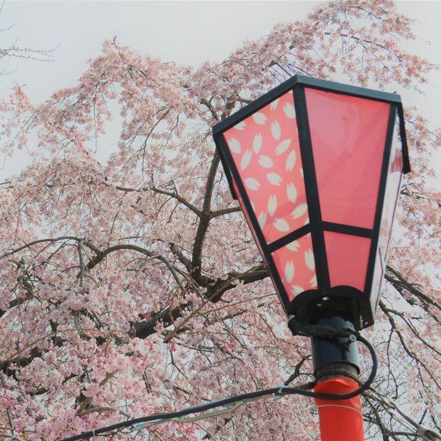 Para no tronaros demasiado con fotos del viaje a Japón 🗾 he decidido que iré subiendo fotos normales del día a día, como siempre, y cada X días publicaré además una del viaje. Me parecen TAN bonitas 😍 que quiero compartirlas.  Algunas las he hecho con la reflex (Nikon D3200) y otras con el móvil 😅 no sé si aquí se apreciará la diferencia de calidad.  Esta de hoy es un cerezo en flor con su farolillo. Me sorprendió ver farollillos similares en todas las partes de Japón que había cerezos…