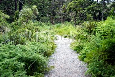 Footpath, Nelson Lakes National Park, NZ Royalty Free Stock Photo
